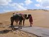 Camelroadfin_2