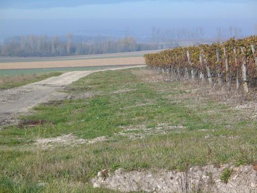 Vineyard, Bordeaux region