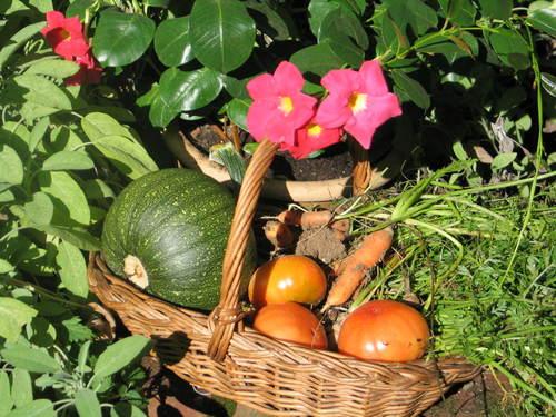 vegetables for dinner from the garden